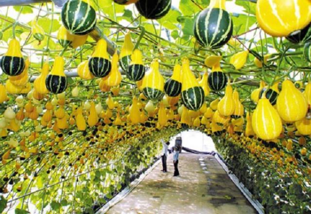 100 Từ vựng tiếng Hàn về chủ đề nông nghiệp